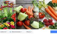 Vilmorin Garden - prowadzenie i grafika fanpage